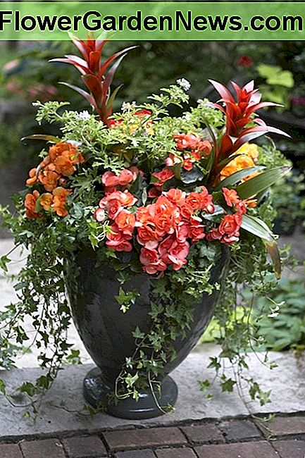 Unleash your creativity with easy container gardens using the popular concept of the