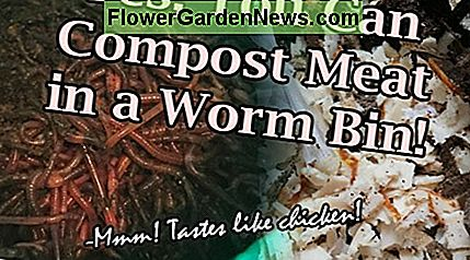 Yes, it is possible to compost small amounts of meat in a worm bin. The red wigglers love it!