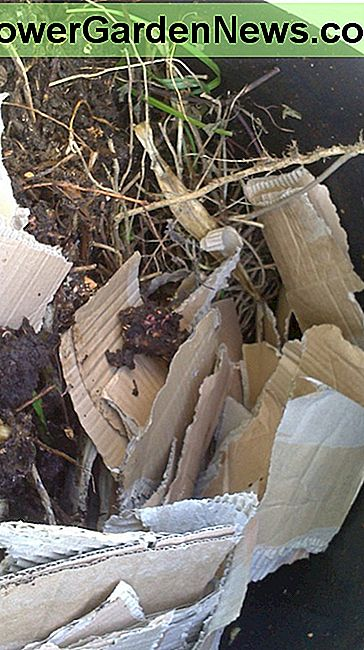 Here I have added dry garden waste from purning and torn up cardboard which I will then mix in with a garden fork.