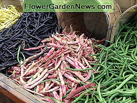 Beans are one of many Vegetables that grow well when planted in spring.