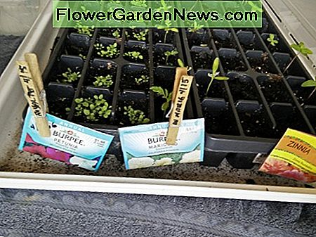 Wooden Clothes Pins with Seed Packet if all seeds are used