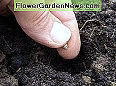 If it's the right time of year, you can sow seeds directly over compost material immediately after you've buried it.
