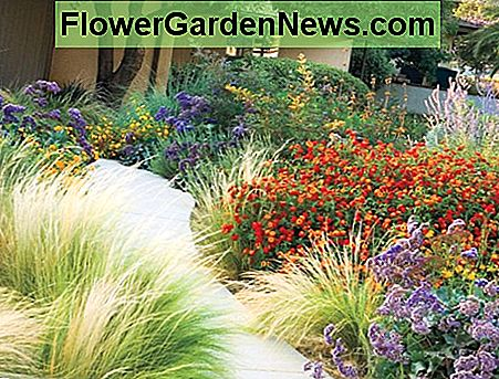 This garden uses feathery ornamental grass, lantana, Russian sage, and statice.