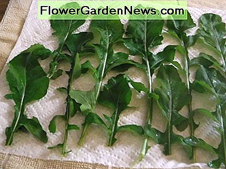 Place arugula in a single layer on a paper towel.