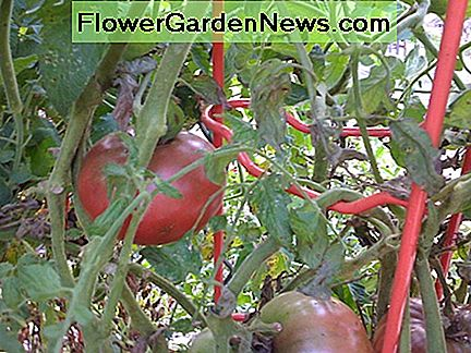 A one-time investment of sturdy metal tomato ladders will last a lifetime.