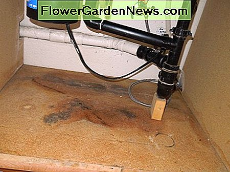 Water Damaged Wood With Molds Under Kitchen Sink