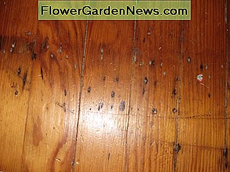Most vintage heart pine will have flaws that are just part of the charm. This is from a carpet threshold.