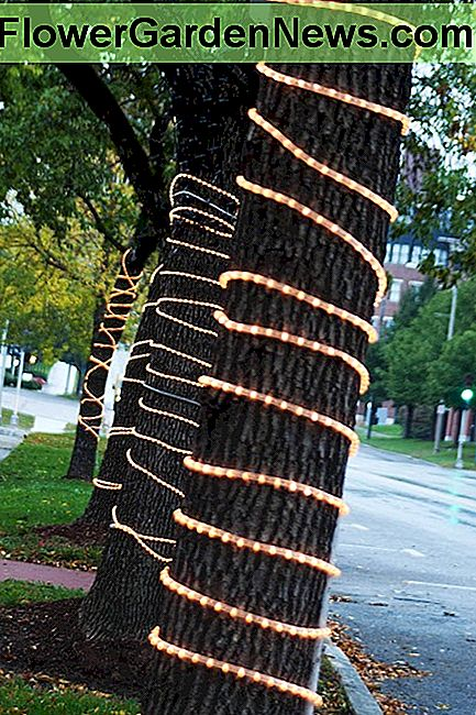Rope lights can also be used as purely decorative lighting, such as Christmas lights