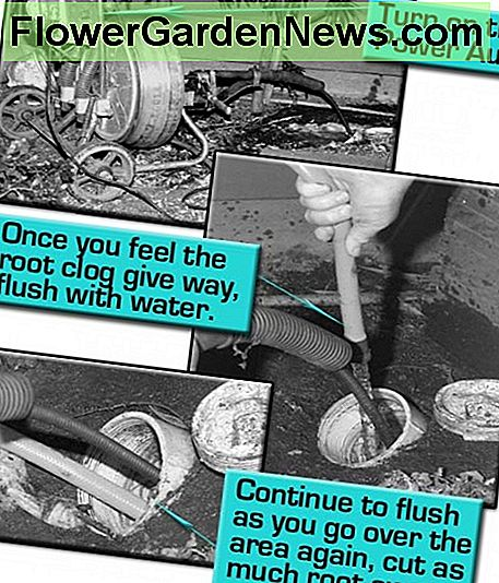 Turn on the Auger and feed cable until you feel the clog clear. Flush with hose water as you go over the area clearing as much of the root away as possible.
