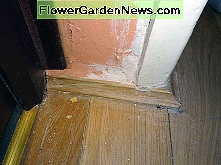 Close up view of the old skirting board by the entrance to the dining room