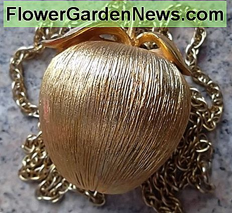 The golden apple pomander