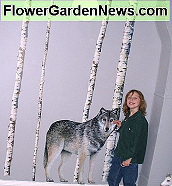 This life-sized wolf is really a wall mural. See how big he is and how real it looks? I think it would be scary to have a wolf in your room, but Lacey thinks he keeps her safe.