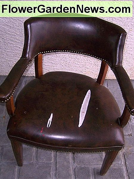 Large leather tear in a leather chairl