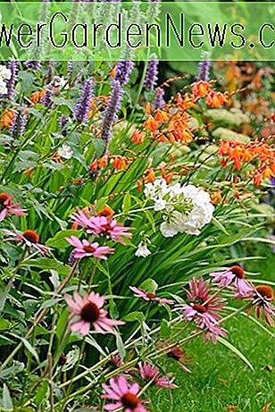 En Superb Summer Border Idea med Coneflowers, Crocosmia, Hyssop & Phlox
