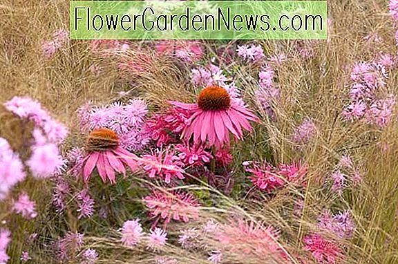 Garten Ideen, Border Ideen, Pflanzenkombinationen, Blumenbeet Ideen, Sommer  Grenzen, Herbst Grenzen
