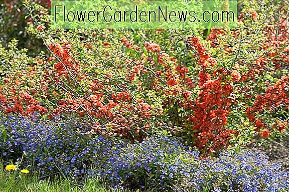 Hecken Ideen, Zaun Ideen, Pflanzen Kombination Ideen, Grenzen Ideen,  Mehrjährige Kombinationen, Frühling Kombinationen
