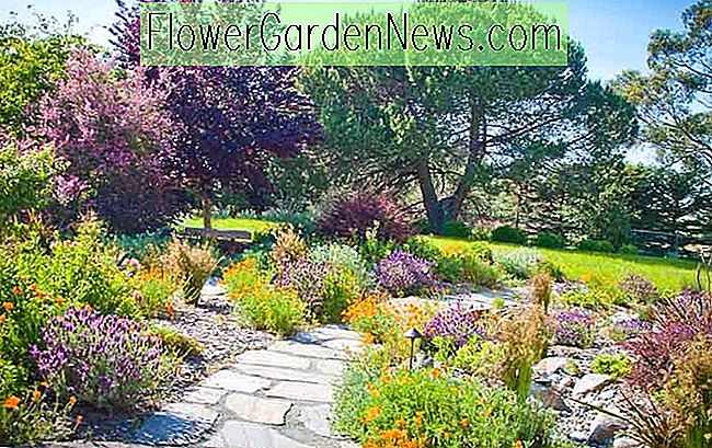 Gut Garten Ideen, Landschaftsbau Ideen, Trockenheit Tolerante Pflanzen, Volle  Sonnenpflanzen, Mediterrane Pfad,