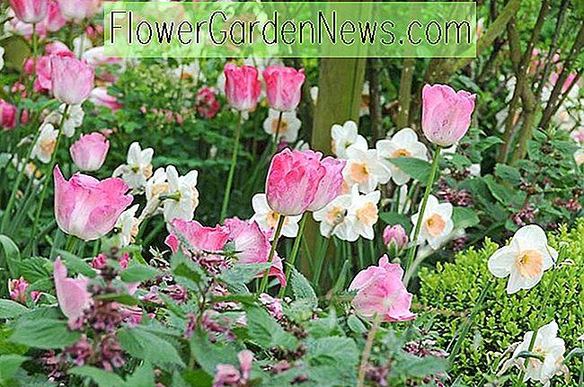 Frühlings Kombination Ideen, Blumenkombinationen, Pflanzenkombinationen,  Blumenbeet Ideen, Frühlingsgrenzen, Narzissen ...