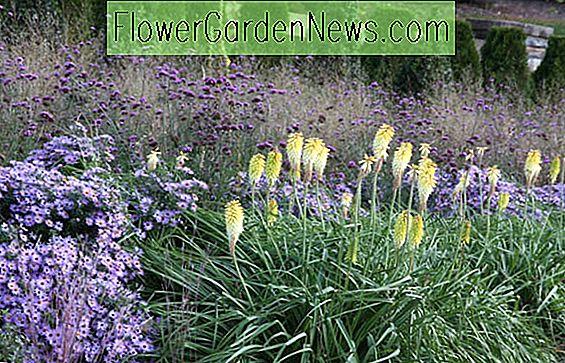 Entzuckend Garten Ideen, Landschaftsbau Ideen, Herbst Grenzen, Fall Pflanzenmischung,  Herbst Garten Ideen,