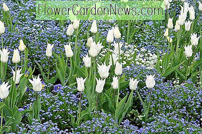 Fantastisch Frühlings Kombinations Ideen, Birnen Kombinationen, Pflanzenkombinationen,  Blumenbeet Ideen, Frühlingsgrenzen