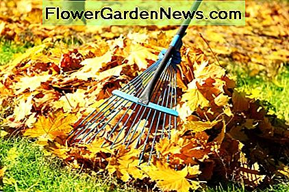 Raking is one healthy alternative to using leaf blowers. Not only does it do the job, but it gets you outside and gives you exercise too.