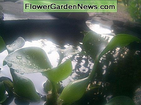 some aquatic plants in a garden pond