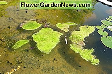a garden pond with excess algae