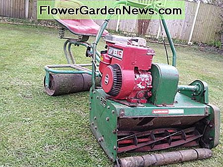 Powered reel or cylinder mower