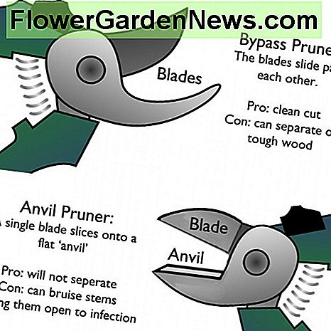 Anvil pruner versus bypass pruner