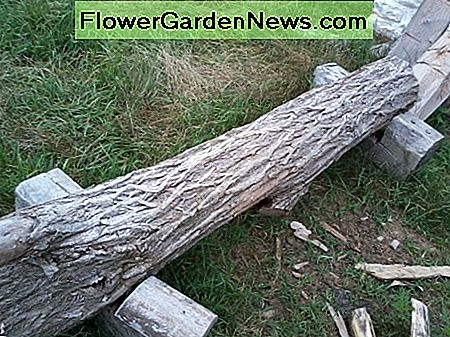 A Black Locust log waiting to become a fence post.