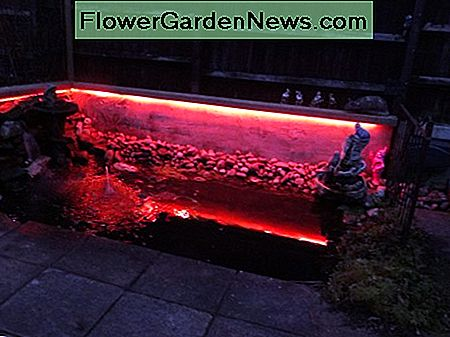 Coloured LED strip lighting used for my wildlife pond.
