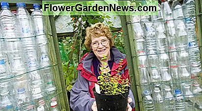 This photo shows the plastic bottle greenhouse built by 68-year old Linda Woollard as part of a university project.