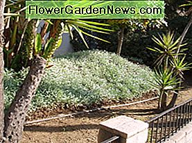 Drought tolerant plants need hardly any watering. That section of the landscape needs a station of its own, with its own watering schedule, or the plants will be overwatered.