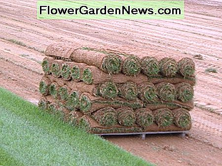 Most sod farms sell it by the pallet, and rolled up in long strips.