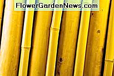 bamboo is used in different building applications.