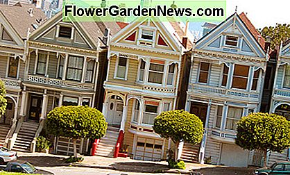 The Painted Ladies adjacent to Alamo Square are just a small sampling among thousands of Victorians in San Francisco.
