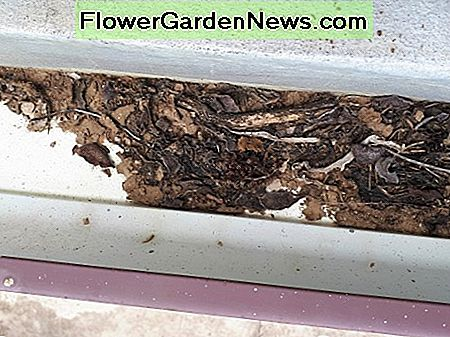 Debris and dust should be removed from gutters