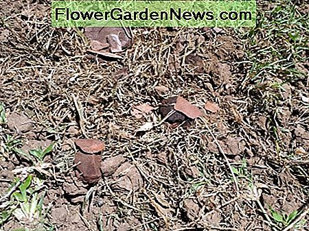 Loosened soil mixed with mulch (dry grass and bark chips)