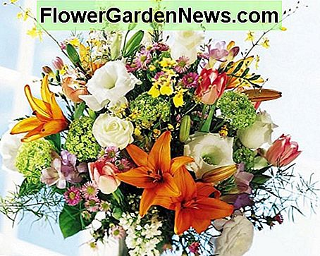 064cb74f70d Hoe je gesneden bloemen laat langer binnen maken 🌹 Nuttige Tips ...