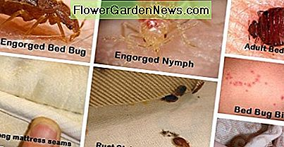 The group of photos shows all of the reasons you need to learn to identify bed bugs and find ways to get rid of them.