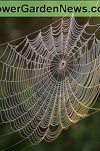 Spiders have been making webs for millions of years.