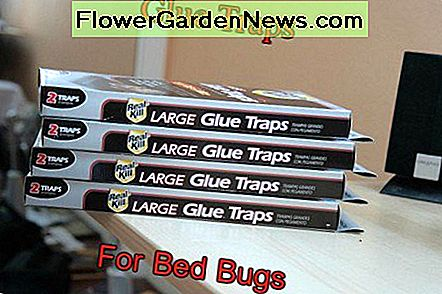 Buggybed i Expel Bed Bug Trap Recenzje