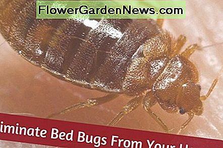 Get rid of bed bugs from your home quickly with these tips!