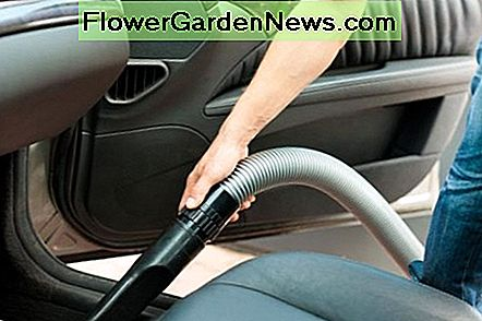 Vacuum your car to remove bed bugs: pay special attention to the cracks and crevices.