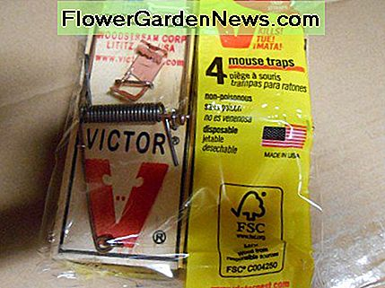 Old faithful - the spring loaded mouse trap! Works every time!