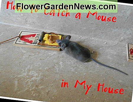 Living in the country, we do encounter occasional mice in our home. Here are a few of the ways we have used to eliminate them.
