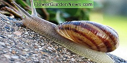 Some gardeners love slugs, but most people see them as common pests.