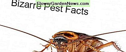 Check out these bizarre insect facts!