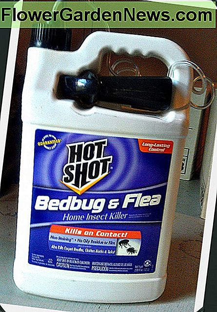 Hot Shot Bed Bug og Flea Spray Review