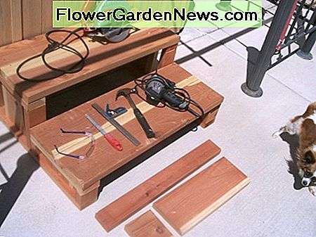 Circular saw, safety glasses, file, square, hammer, power drill with drive for screws, Papillon (optional). Not shown: tape measure, extension cord, 1-inch brush, very small paint roller. Loose boards in front of steps are what's left after cutting.
